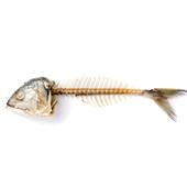 魚の骨などのエキス残渣